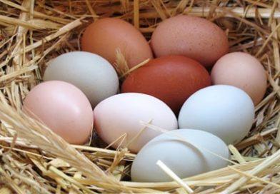 تخم مرغ و خواص آن همراه با جدول ارزش غذایی